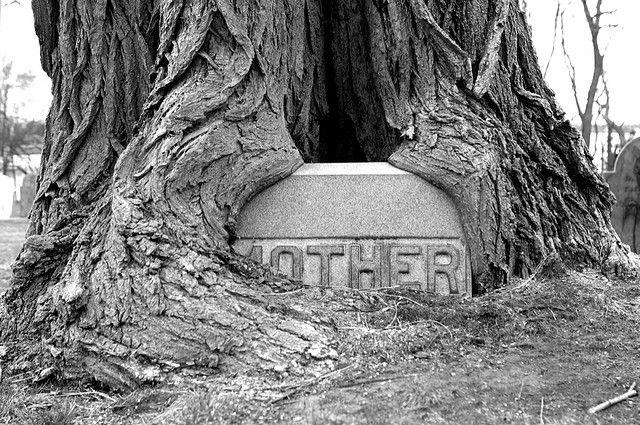 Памятник в корнях дерева